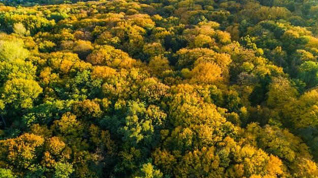 Goldener herbst, luftaufnahme der waldlandschaft mit gelben bäumen von oben
