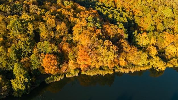 Goldener herbst, luftaufnahme des waldes mit gelben bäumen und seelandschaft von oben
