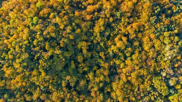 Goldener herbsthintergrund, luftdrohnenansicht der schönen waldlandschaft mit gelben bäumen von oben