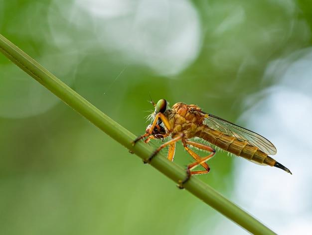 Goldener käfer, der nahrung isst