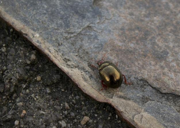 Goldener käfer