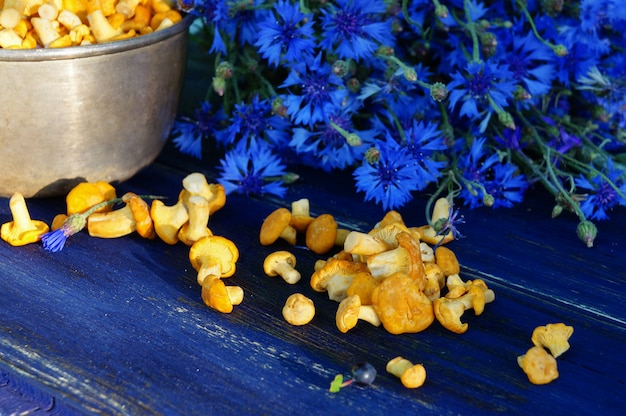 Goldener pfifferling oder cantharellus cibarius mit blauen centaureas