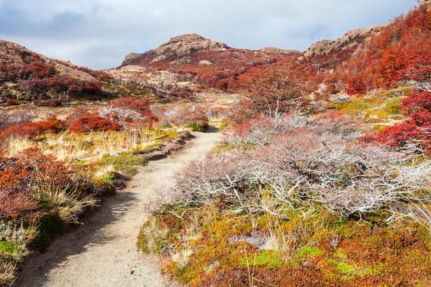 Goldener wald in patagonien