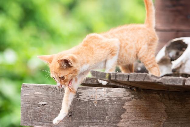 Goldenes kätzchen, das opfer auf einem holzhaus sucht
