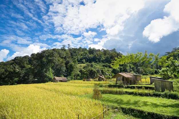Goldenes reisfeld mit kleinem häuschenhaus auf schönem grünem hügel und hellem bewölktem blauem himmel