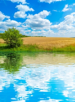 Goldenes weizenfeld mit blauem himmel und wolken. agrarlandschaft mit wasserreflexion.