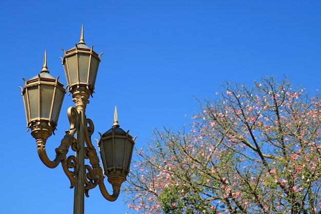 Goldfarbener nobler laternenpfahl mit blühendem silk floss-baum gegen klaren blauen himmel in buenos aires