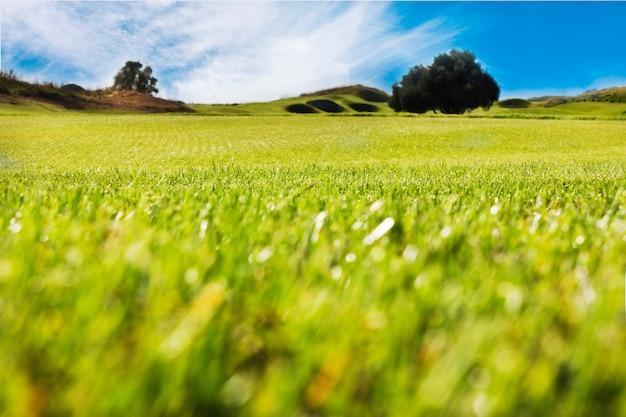 Golfplatz in belek. grünes gras auf dem feld. blauer himmel, sonnig