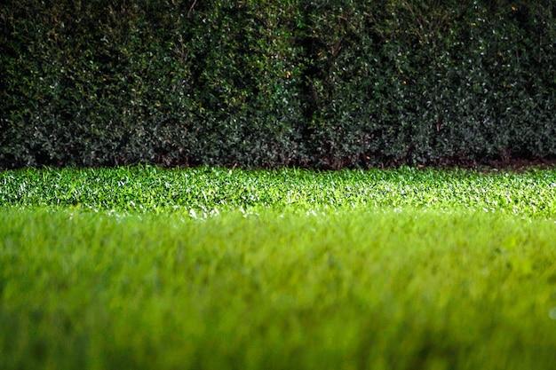 Gräser auf dem boden im dunklen nachtgarten mit scheinwerferlicht.