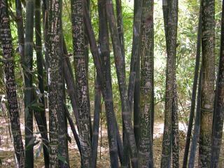 Graffiti auf bambus