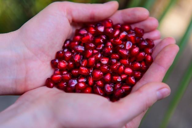 Granatapfelkerne in den handflächen der frau schließen. weibliche hände, die granatkorn-draufsicht halten