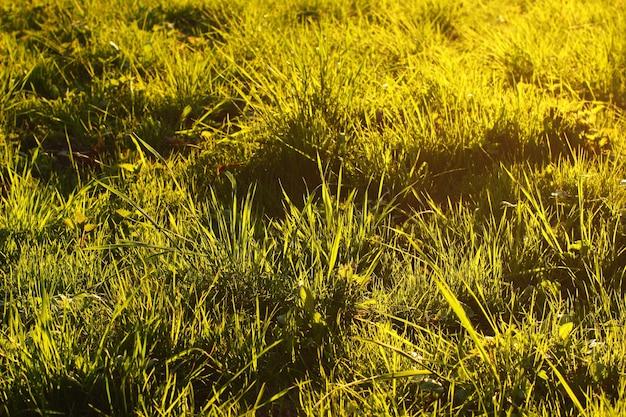 Gras bei sonnenuntergang hautnah