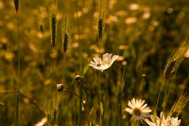 Gras bei sonnenuntergang mit retro / vintage filter