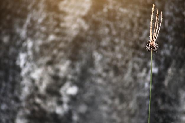 Gras blüht mit sonnenlicht und hölzernem hintergrund im garten. platz kopieren