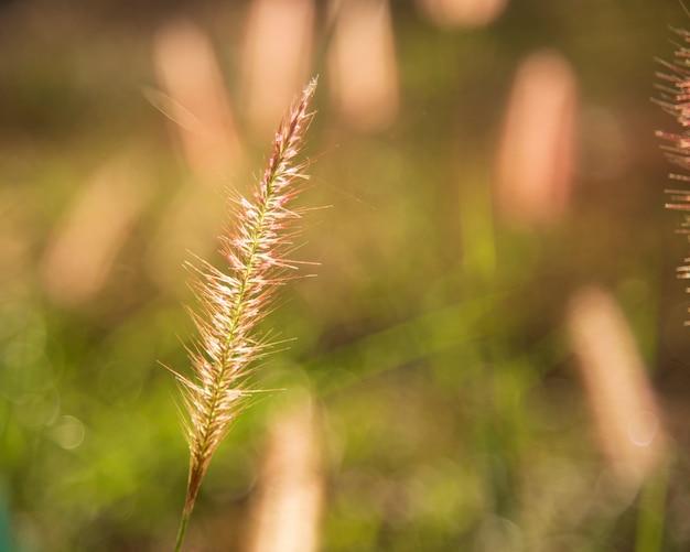 Gras blumen