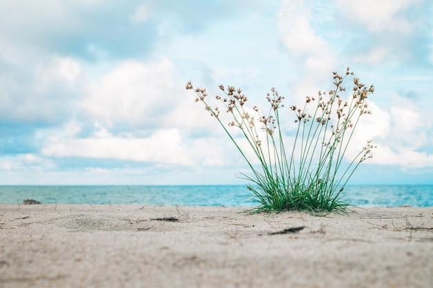 Gras, das auf dem strand wächst. hintergrund ist meer und blauer himmel