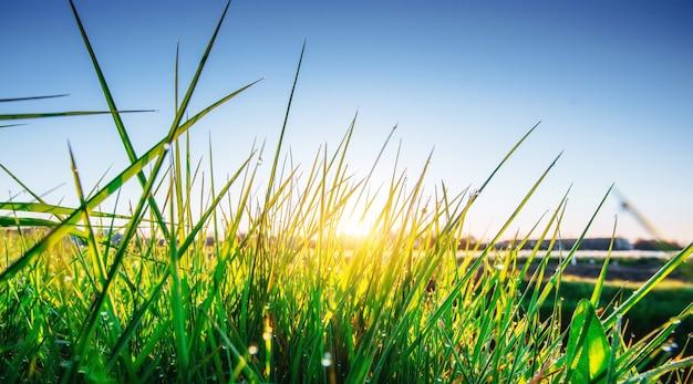 Gras. frisches frühlingsgrüngras