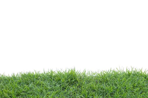 Gras getrennt auf weißem hintergrund.