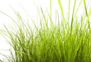 Gras im freien