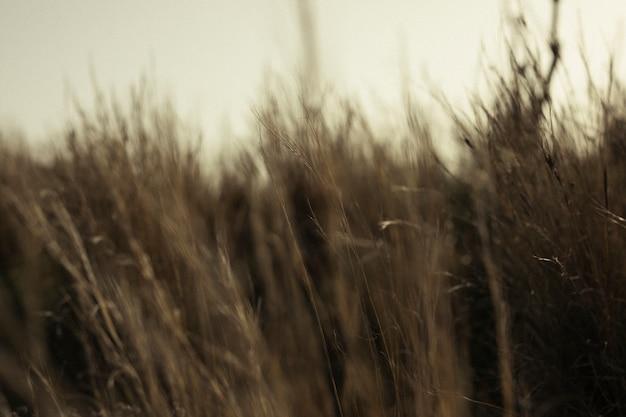 Gras im unscharfen hintergrund