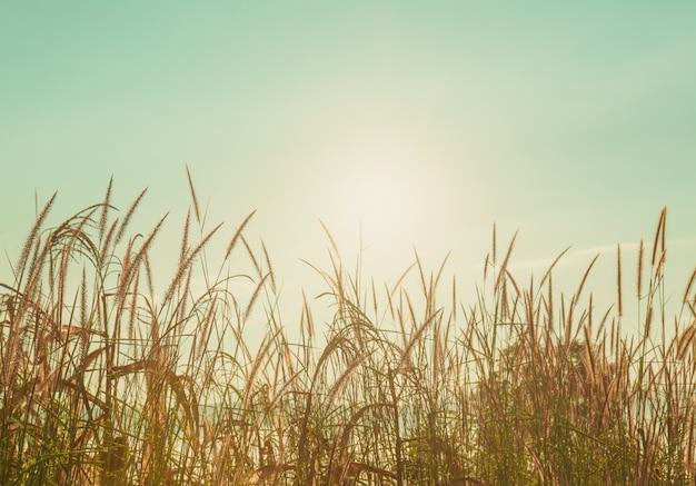 Gras in den bergfeldern am frühen morgen.