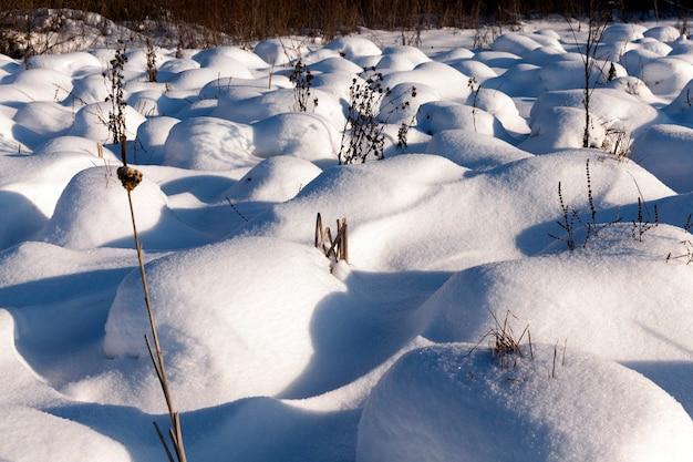 Gras in großen verwehungen nach schneefällen und schneestürmen, die wintersaison mit kaltem wetter und viel niederschlag in form von schnee bedecken das gras und trockene pflanzen