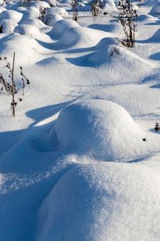 Gras in großen verwehungen nach schneefällen und schneestürmen, die wintersaison mit kaltem wetter und viel niederschlag in form von schnee bedecken das gras und trockene pflanzen Premium Fotos