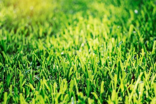Gras mit sonnenschein.
