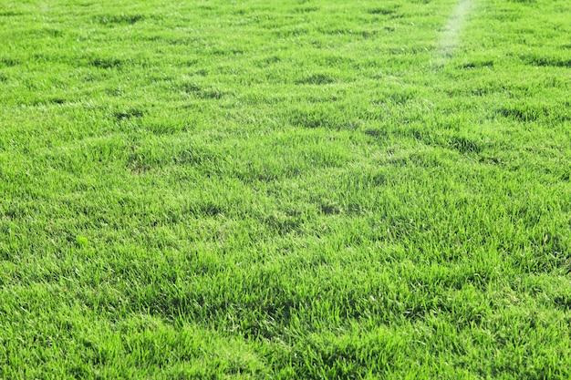 Gras textur von einem feld