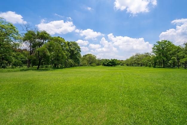 Gras und grüne bäume im schönen park unter dem blauen himmel