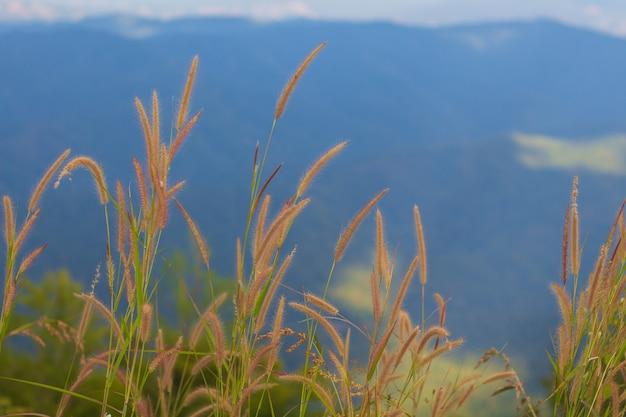 Gras und himmelblau