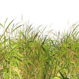 Gras und unkräuter auf einem weißen hintergrund
