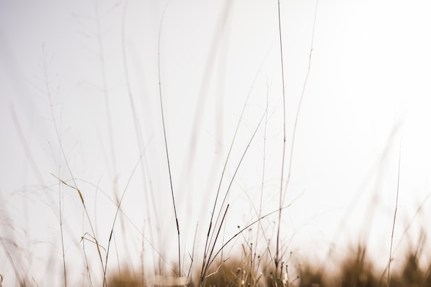 Gras vor undeutlichem hintergrund
