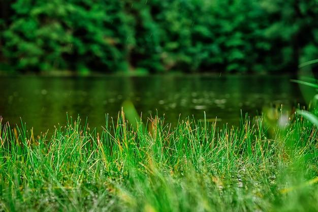 Gras wächst vor dem natürlichen hintergrund des sees