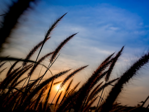 Grasblume in der sonnenuntergangzeit