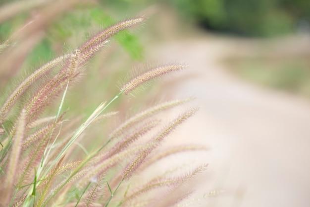 Grasblume mit unscharfem hintergrund gedächtniskonzept.