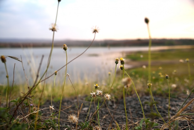 Grasblumen auf sonnenuntergang