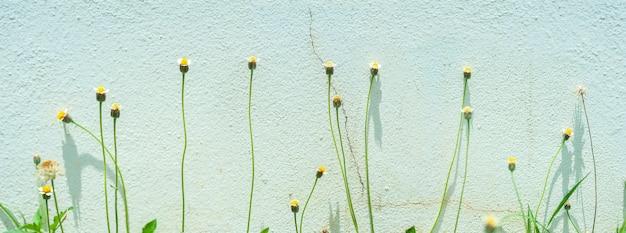 Grasblumengruppe auf leichter zementwand