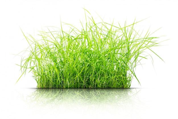 Grasbüschel isoliert