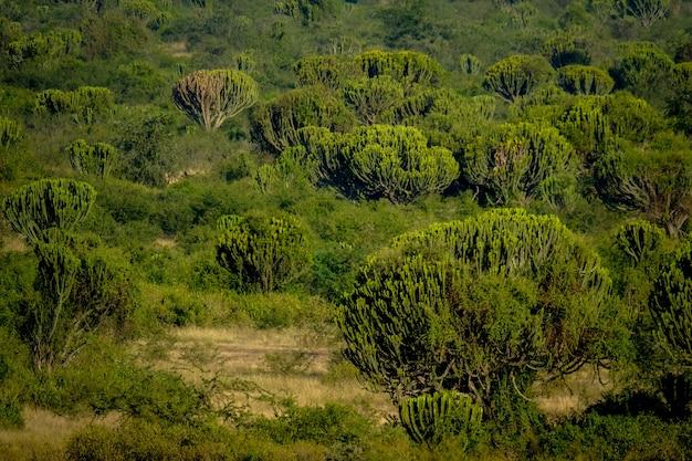 Grasfeld mit kaktusbäumen an einem sonnigen tag