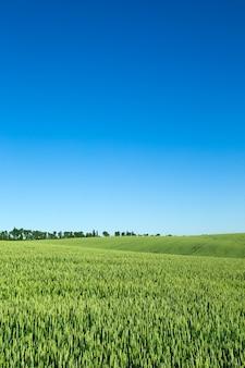 Grasfeld und perfekte himmelslandschaft
