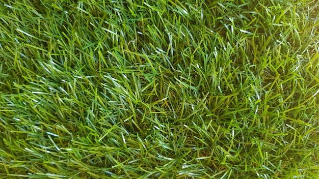 Grashintergrund auf einem golfplatz
