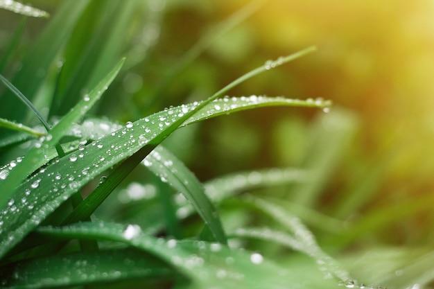 Grashintergrund mit regentropfen des sonnenaufflackerns