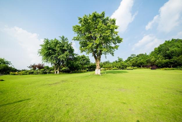 Grasland landschaft und greening umwelt park hintergrund