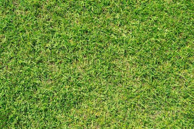 Grasmusterbeschaffenheit für hintergrund. grüner üppiger rasen. nahansicht. Premium Fotos