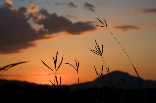 Grassilhouette mit bergen und orangefarbenem himmel in der dämmerung.