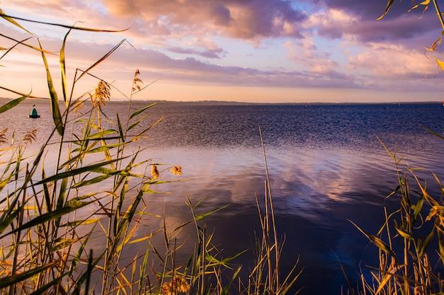 Graszweige auf dem körper des meeres mit dem sonnenuntergangshimmel