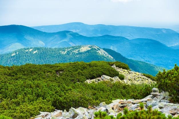 Grat der blauen berge bedeckt mit grünem wald. ukraine, karpaten