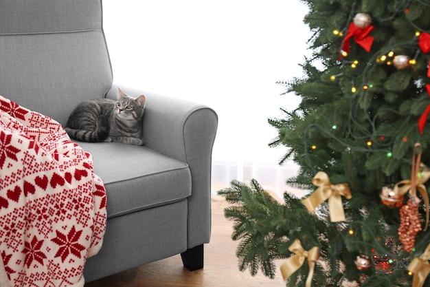 Grau getigerte katze liegt im sessel gegen fenster