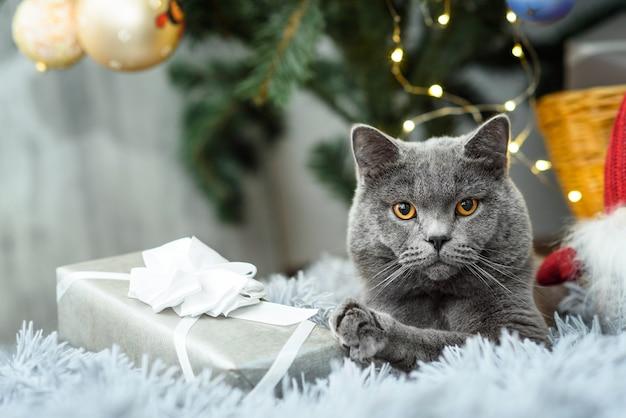 Graue britische katze mit weihnachtsgeschenken am feiertagsthema